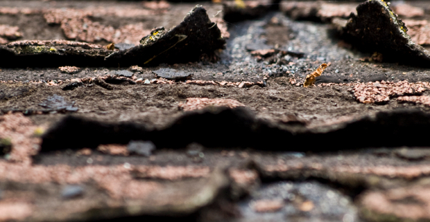 DIY Roof Repair: How to Fix Asphalt Roofing